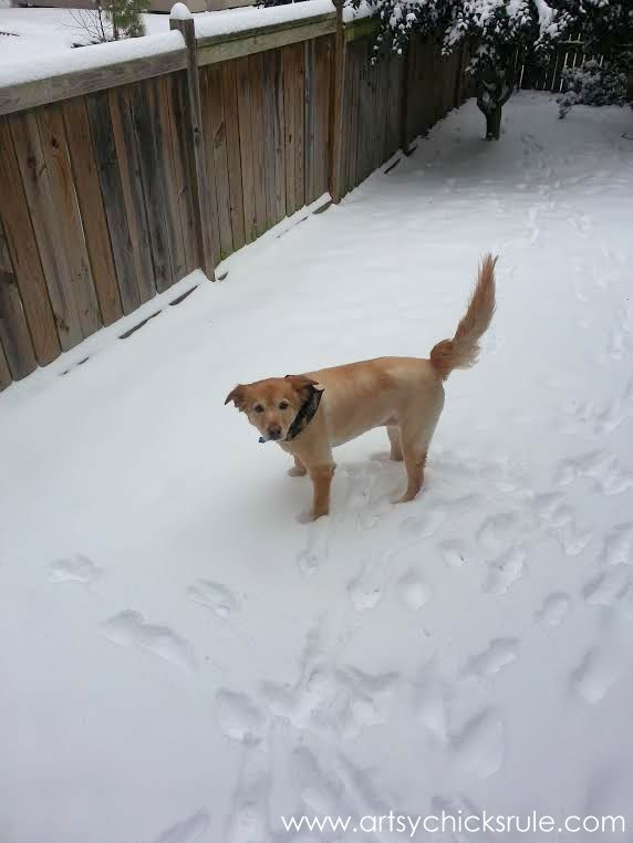 Lexi shaved and in the snow