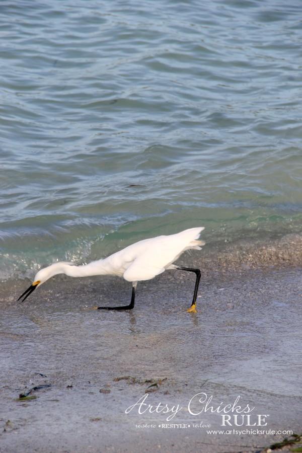 Anna Maria Island Florida Vacation - action shot - artsychicksrule