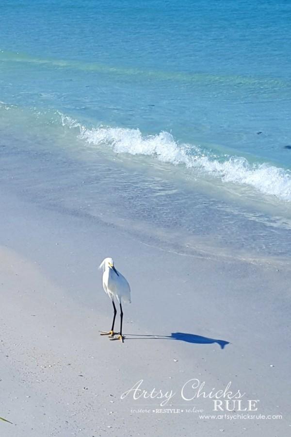 Anna Maria Island Florida Vacation - beautiful photo ops - artsychicksrule