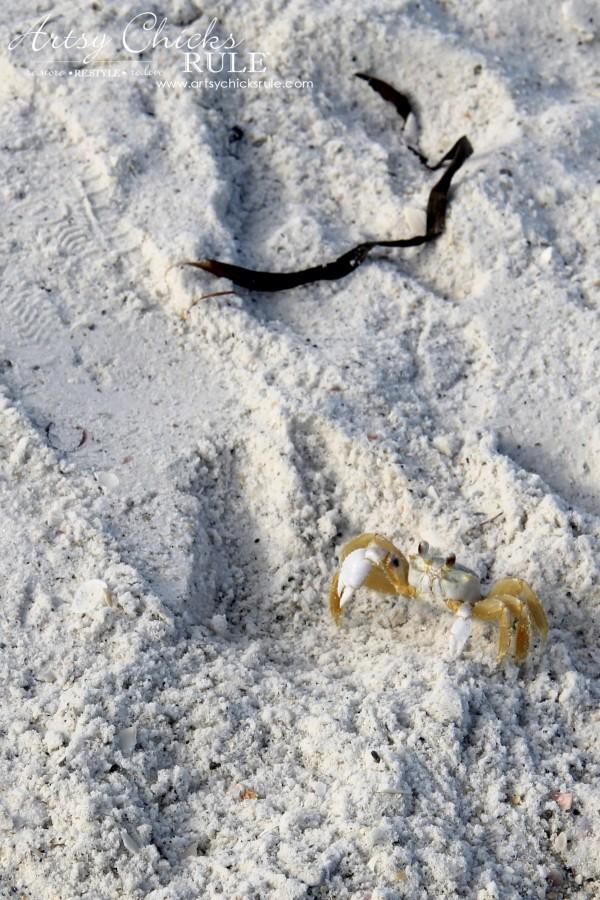 Anna Maria Island Florida Vacation - hi Mr Crab - artsychicksrule