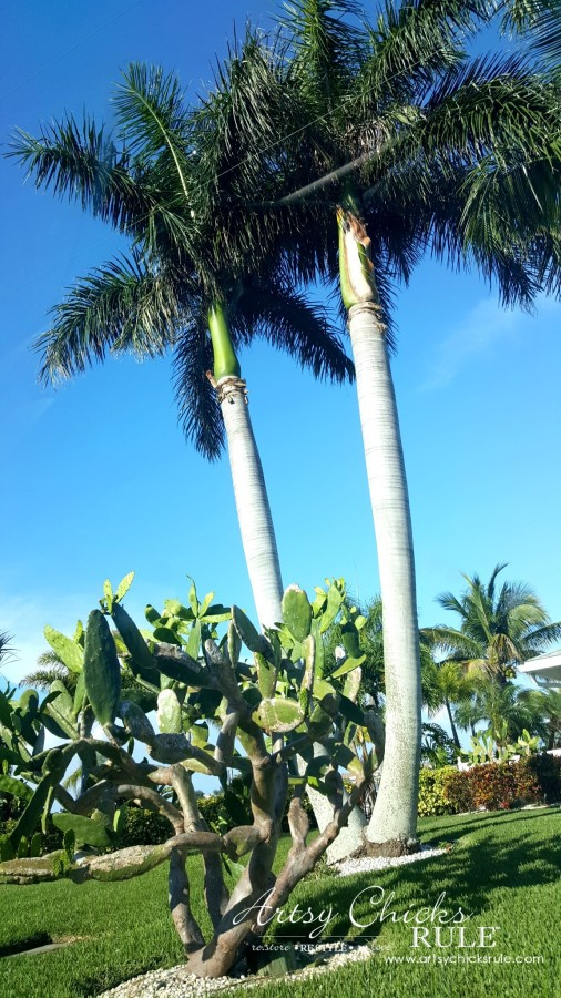 Anna Maria Island Florida Vacation - love the trees and plants - artsychicksrule