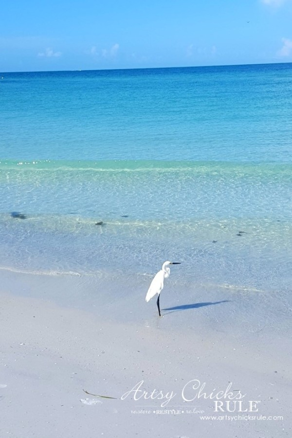 Anna Maria Island Florida Vacation - photo ops everywhere - artsychicksrule