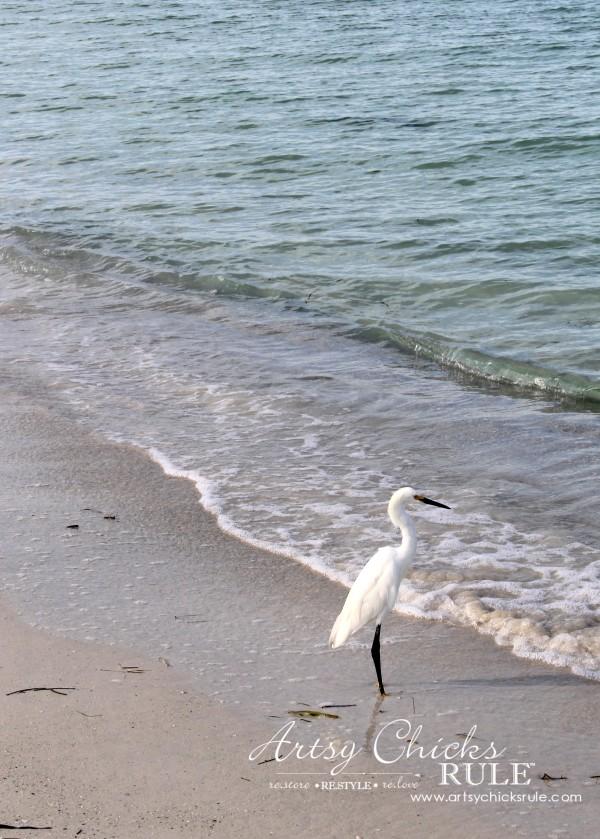 Anna Maria Island Florida Vacation - wildlife - artsychicksrule