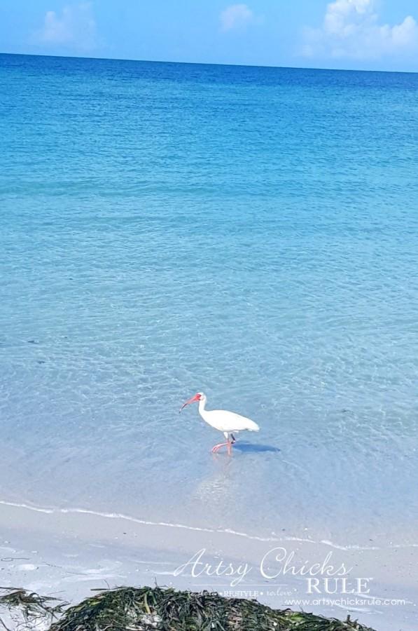 Anna Maria Island Florida Vacation - wildlife galore - artsychicksrule