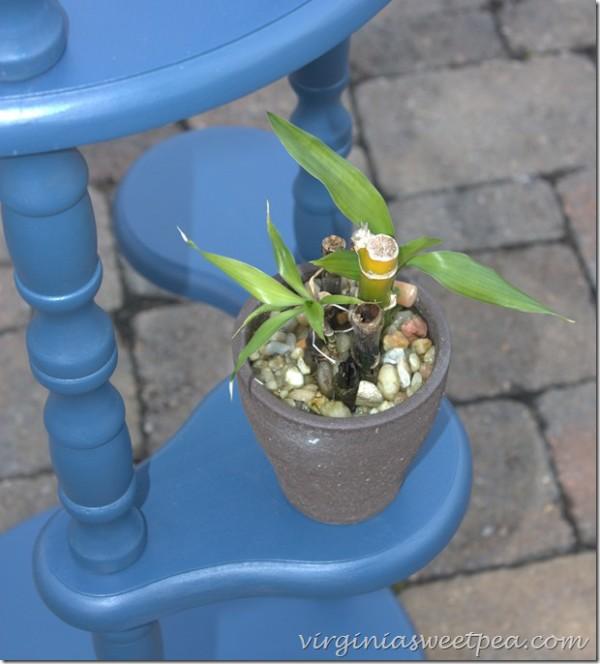 royalvelvetpaintonplantstand - Sweet Pea