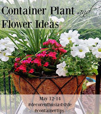 Container & Planter Ideas