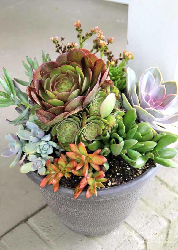 Thrifty Porch Decor - Succulents - artsychicksrule.com #frontporchdecor