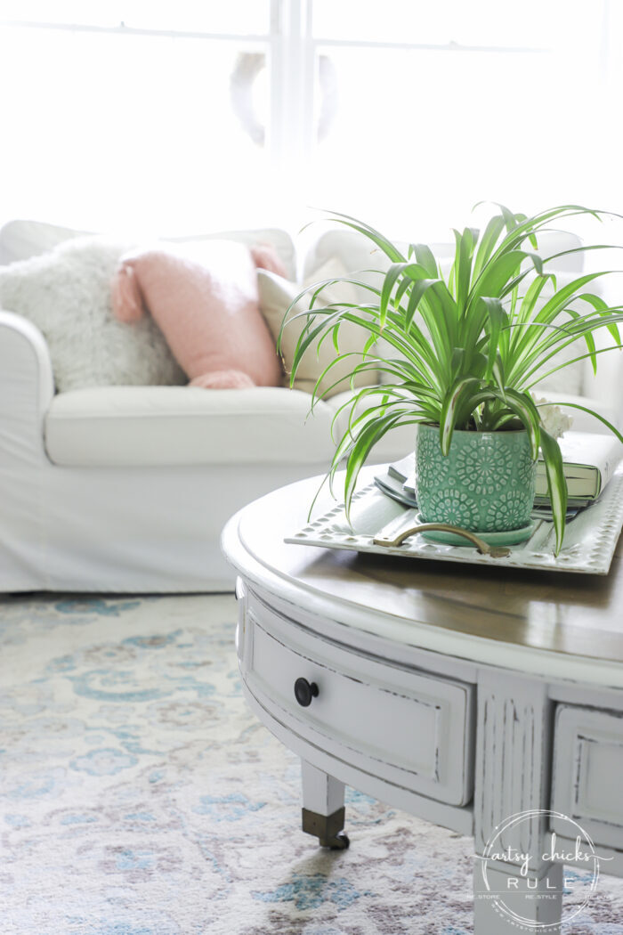 Spider plant, coastal living room decor