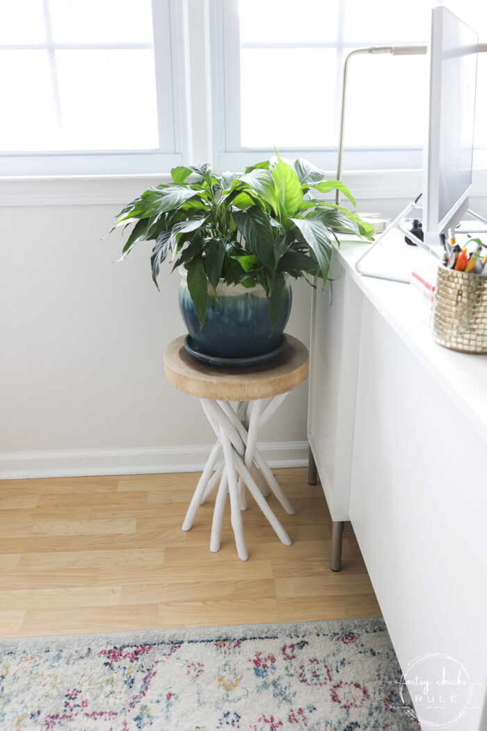 plant on plant stand
