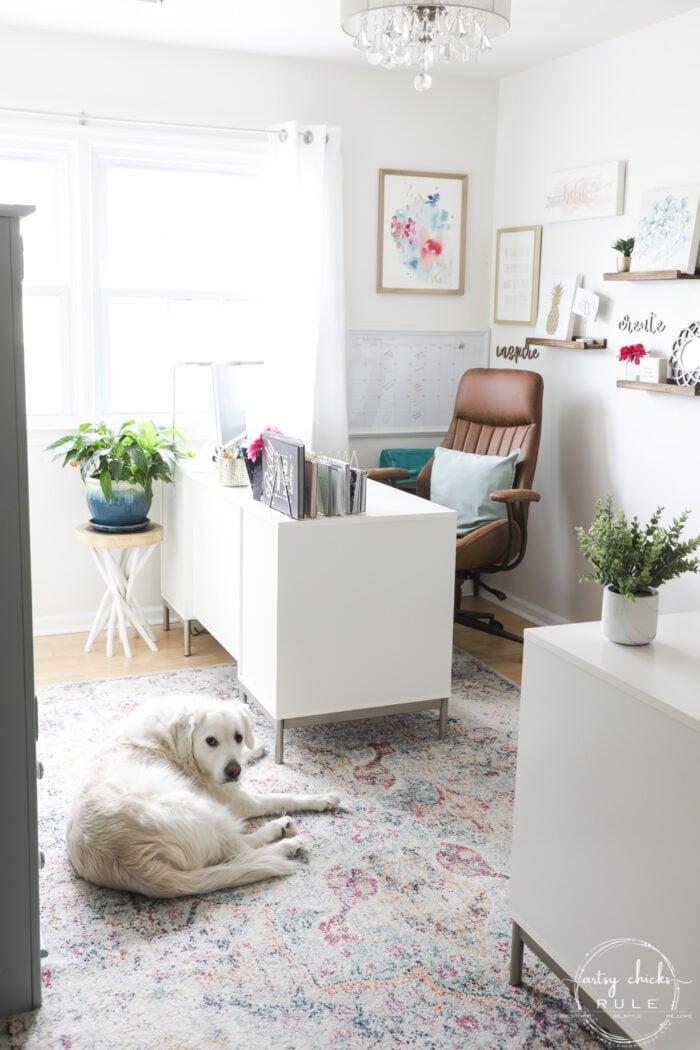 White golden on rug in front of desk