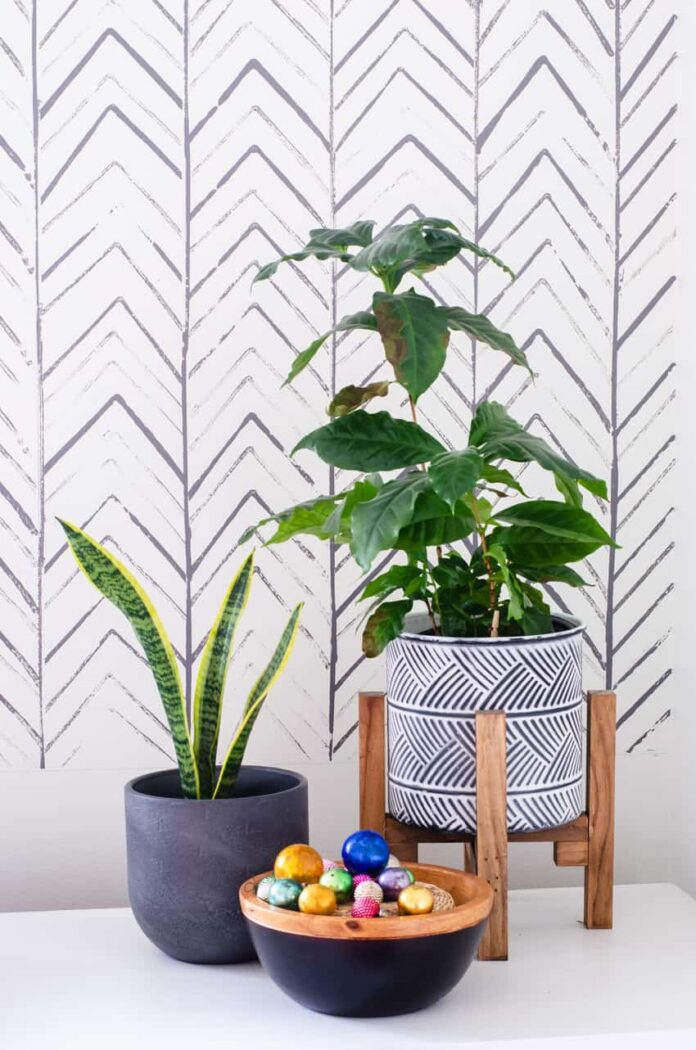 painted lines on wall with plant