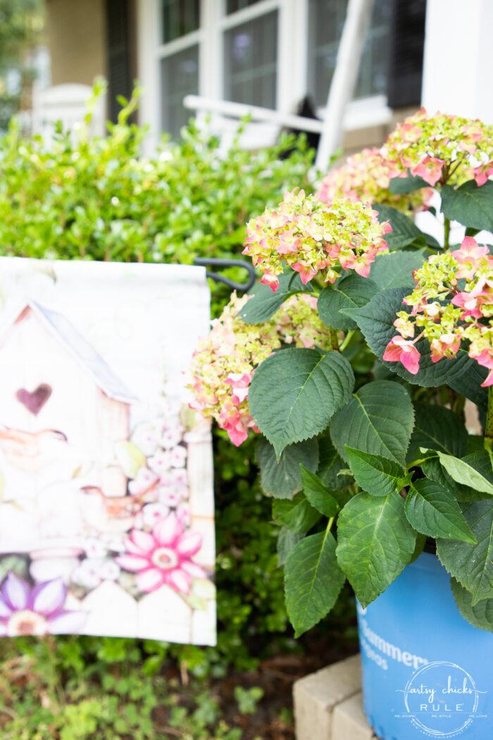 pink hydrangea in blue pot