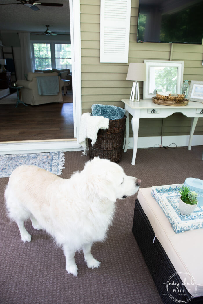 white dog on brown carpet in screened porch