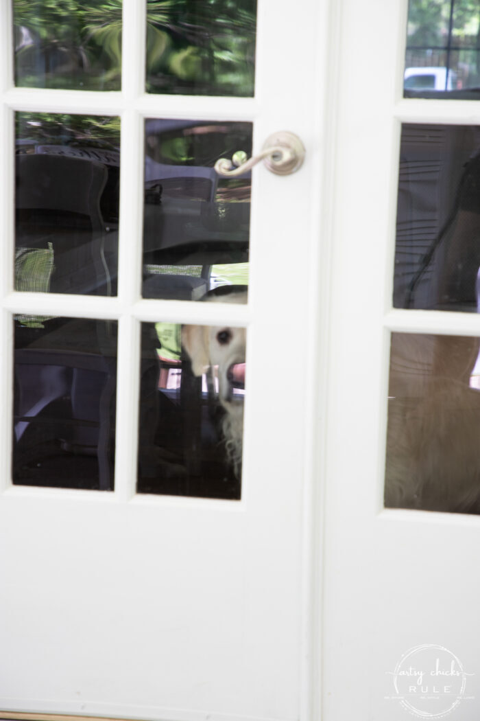 glass french doors with white dog looking out