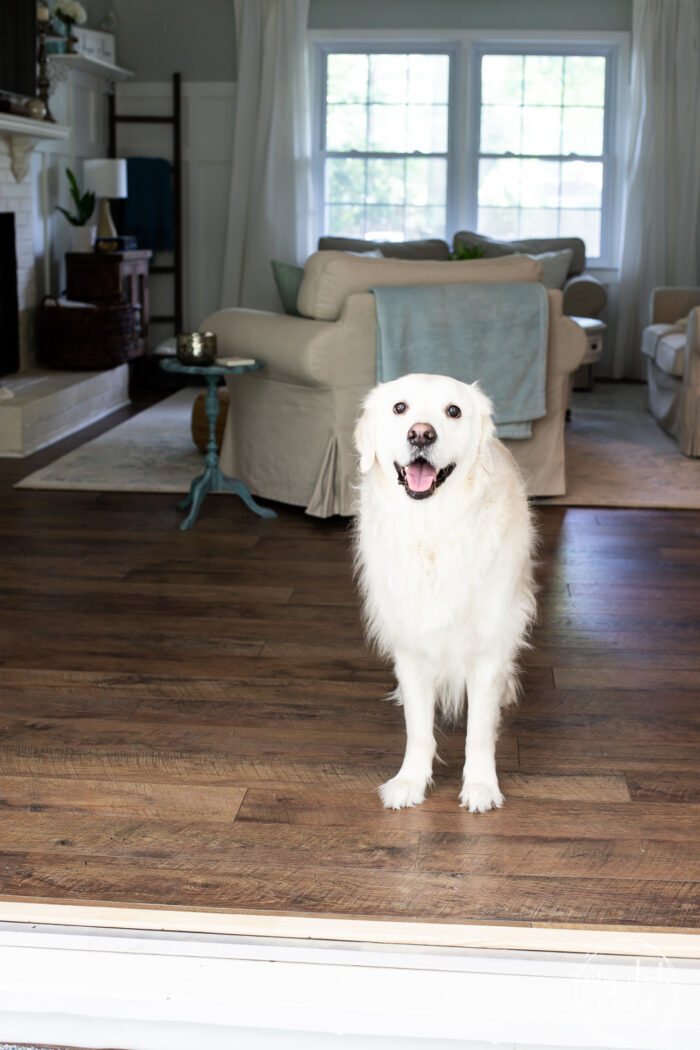 living room doors open with white fluffy dog