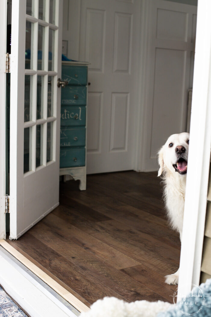 white dog looking out of the opened french doors