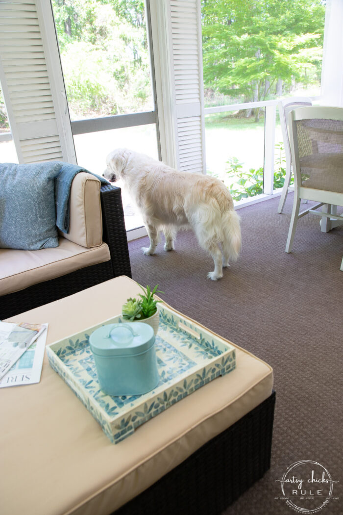 white dog looking out screened porch door