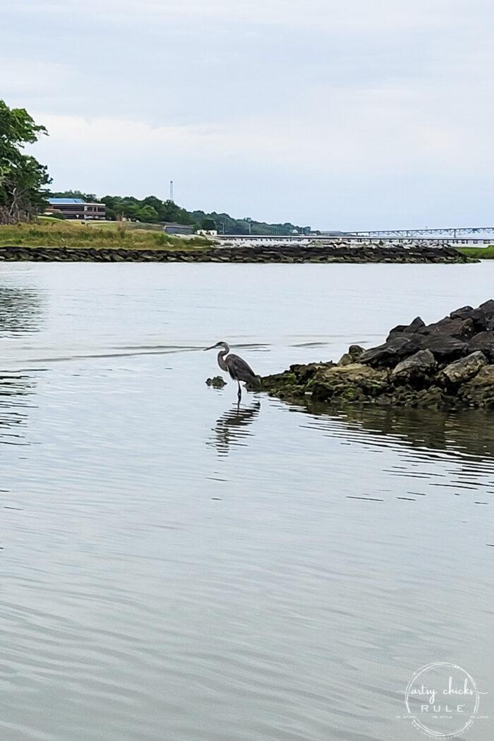 coastal water scene