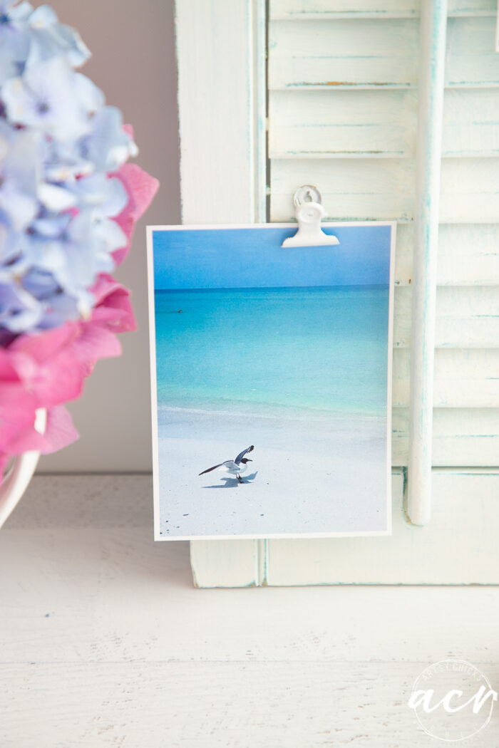 blue water photo with seagull